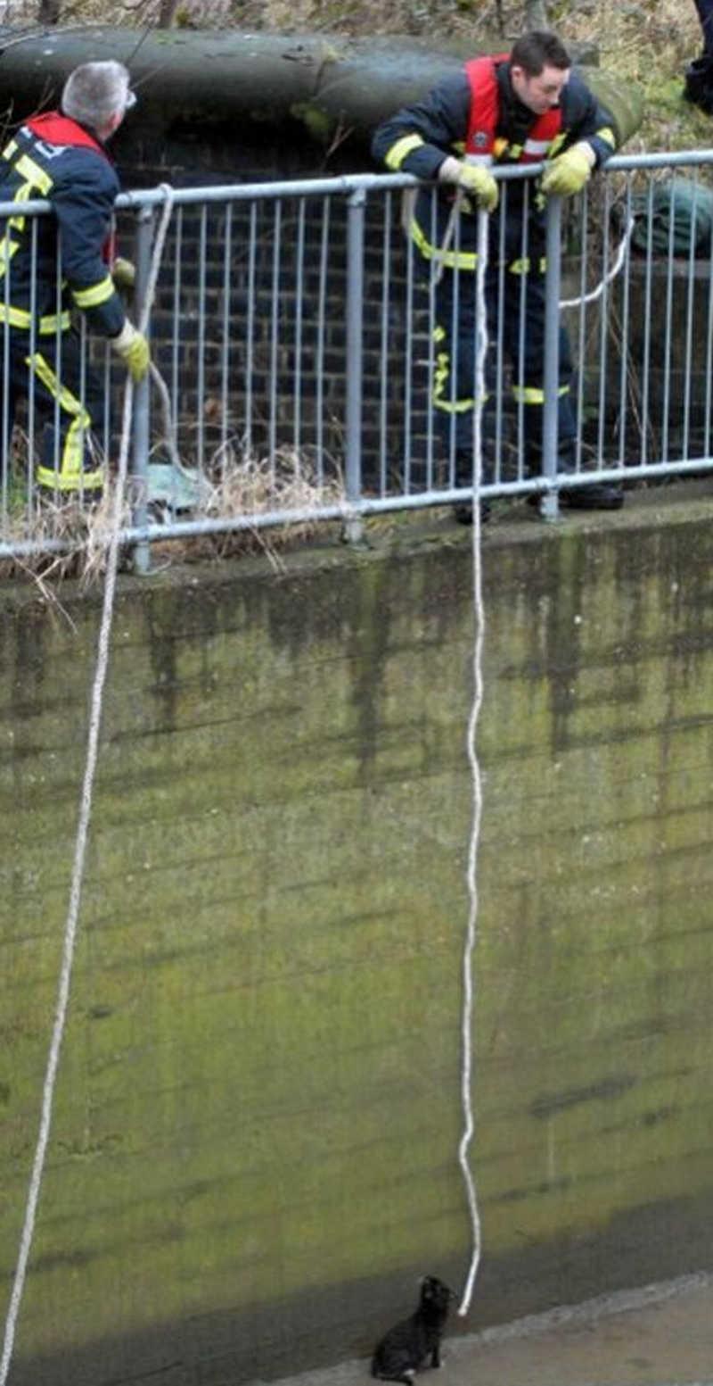 Strażacy spuszczają kotu dwie parciane liny