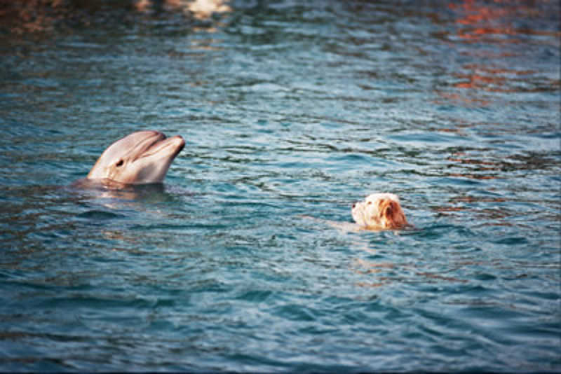 Delfin bardzo zainteresowany psem w wodzie