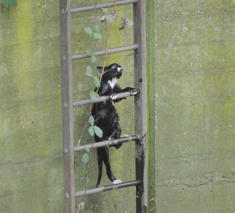 Kot dalej wspina siępo metalowej drabinie