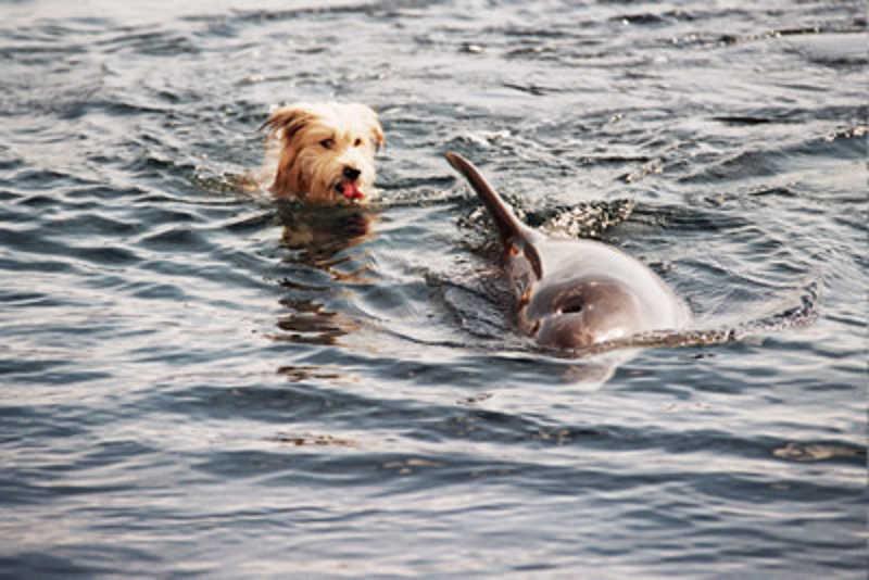 Pies baraszkuje z delfinem
