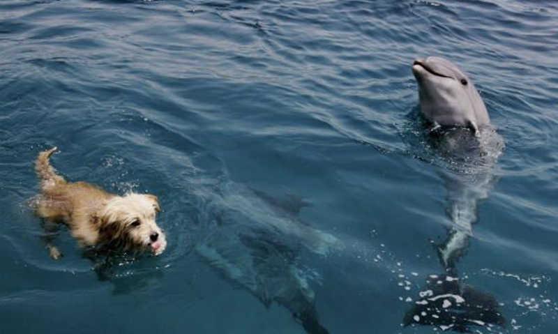 Pies pływa razem z deflinem