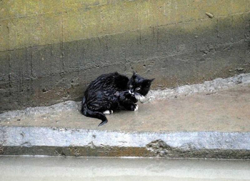Kot wydostał się zwody i usiadł na betonowej połce