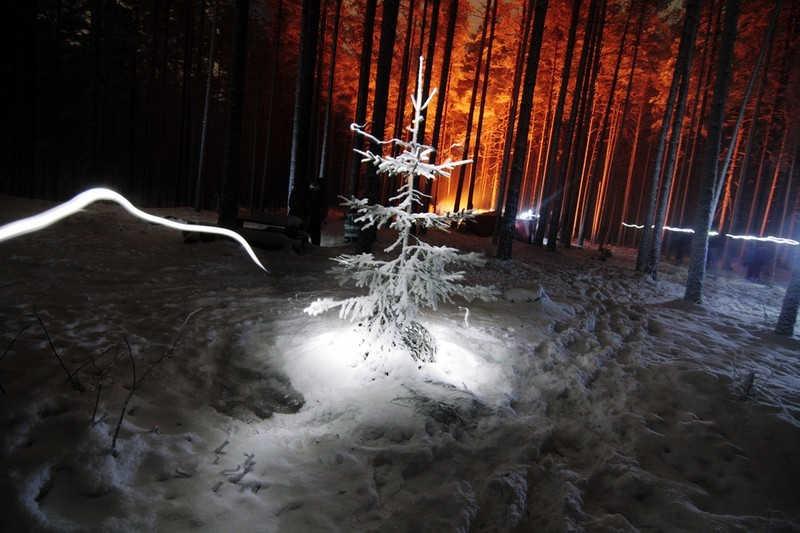 Podświetlona choinka nocą w lesie.