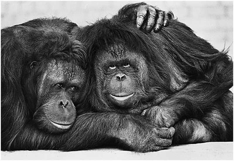 Kudłate małpy