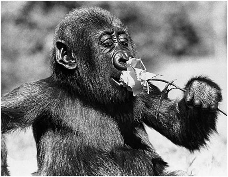 Młoda małpka