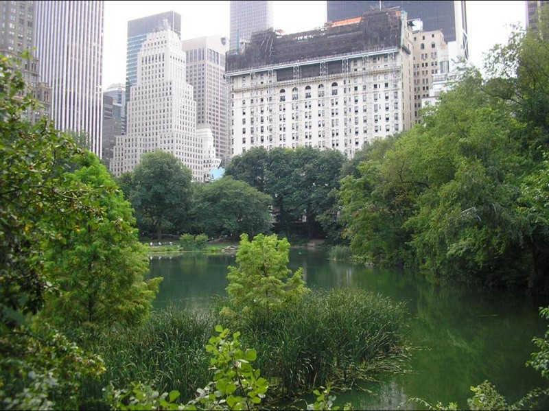 Jezioro w paru obok wieżowców