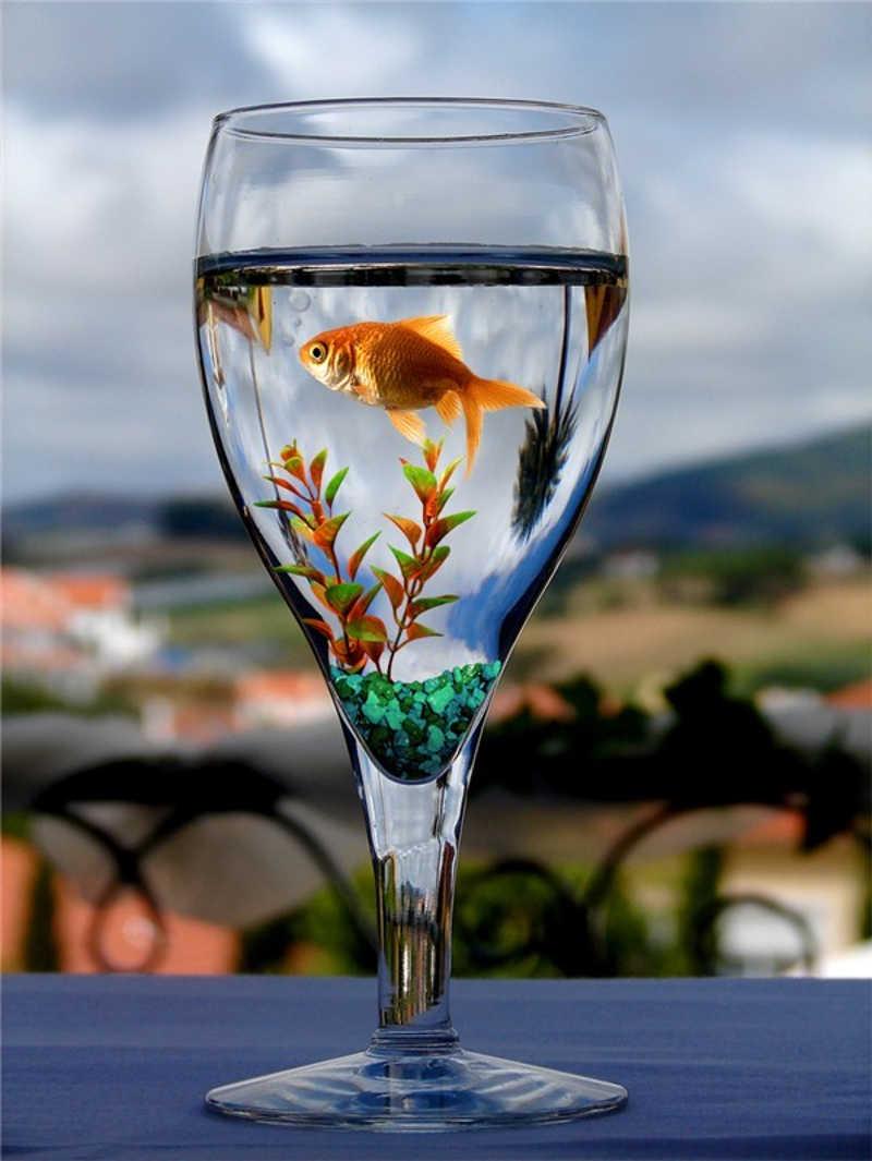 Czerwona rybka w kielichu z wodą