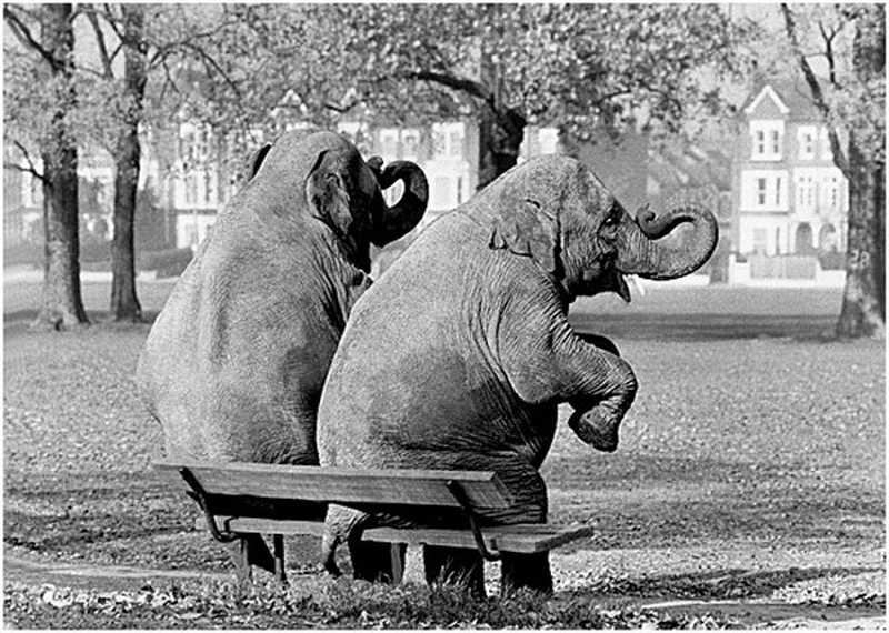 Dwa słonie na ławce