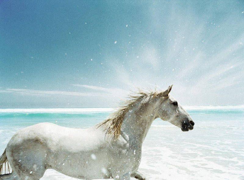 Biały koń na plaży