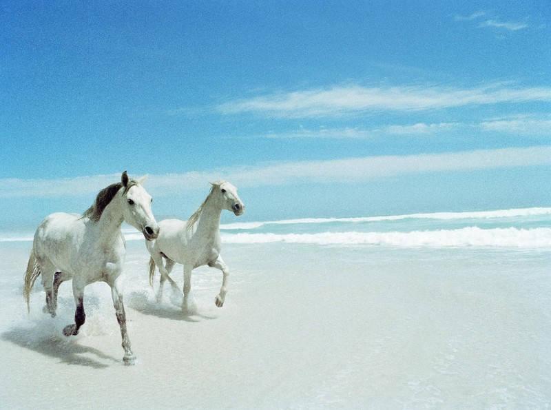 Dwa konie na plaży
