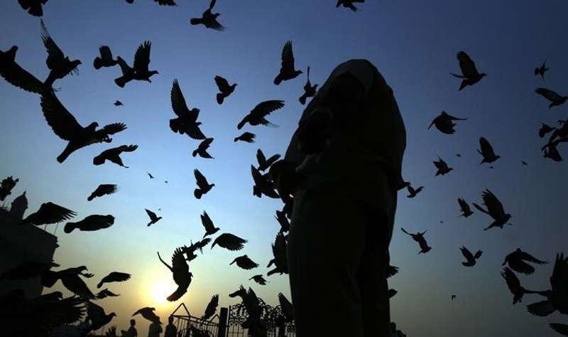 Stado ptaków lata wokół człowieka