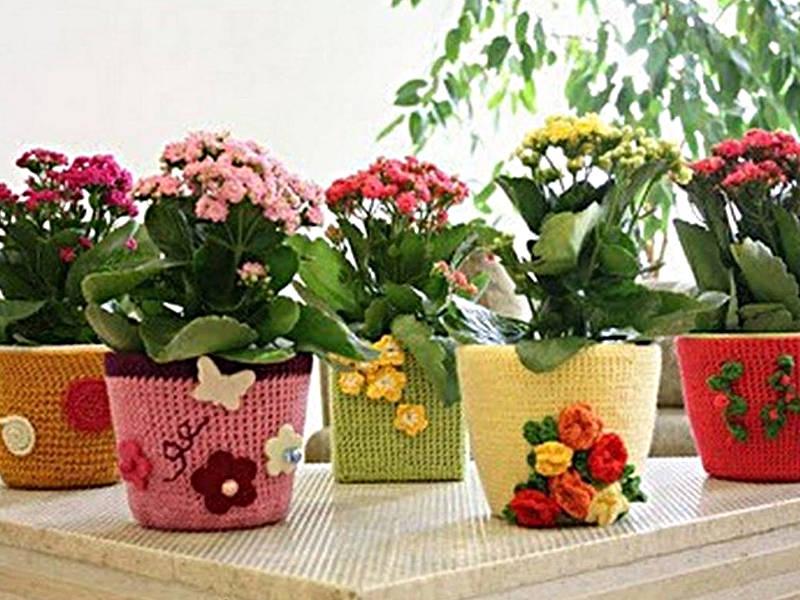 Kolorowe kwiaty w doniczkach na parapecie